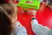 Observamos a los insectos palo