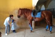 Un dia con caballos